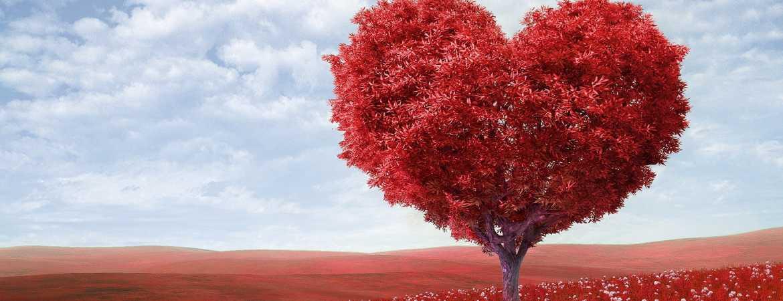 Aşk Hakkında İleri Geri